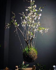 #workinprogress#prunus#somethingsomething#stringGardens#plants#plantsofinstagram#amsterdam