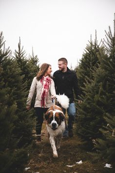 © CiogiArt Lifestyle Photography Saint Bernard. Couple. Christmas. Tree Farm. Christmas Card. Couple and Dog. St Bernard. Puppy Christmas. Kissing Christmas. Christmas Tree Picture. Photo.