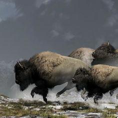 Bison Stampede by Daniel Eskridge Buffalo Animal, Buffalo Art, North American Animals, American Bison, Snow Artist, Produce Displays, Le Far West, Mundo Animal, Selling Art