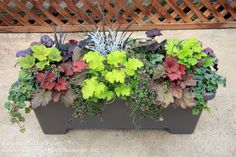 Coral Bells make wonderfully colorful additions in planters!