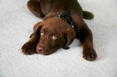 Remove All Stains.com: How to Remove Dog Urine Stains From Carpet Doge,