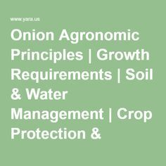 Onion Agronomic Principles | Growth Requirements | Soil & Water Management | Crop Protection & Storage | Yara