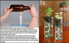 Wine Bottle Planter! I love this idea!