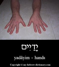"How to say ""Hands"" in Hebrew. The Hebrew suffix ""ayim"" means ""a pair of""… Biblical Hebrew, Hebrew Words, English To Hebrew, Learning A Second Language, Hebrew School, Learn Hebrew, Word Study, Torah, Judaism"