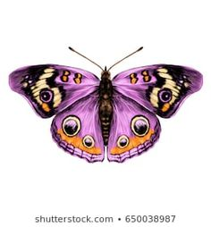 Purple butterfly with open wings top view of symmetry, sketch the graph of vector color drawing butterfly with pink wings. Butterfly Drawings With Color, Butterfly Pictures, Butterfly Painting, Butterfly Wallpaper, Colorful Drawings, Art Papillon, Open Wings, Glass Butterfly, Purple Butterfly