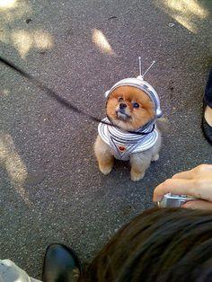 space puppy