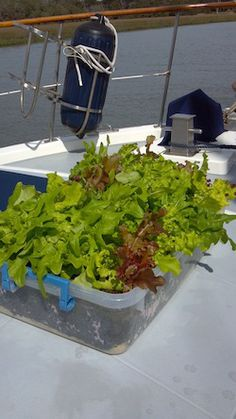 Growing food on a boat