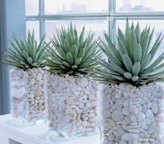 Interior plants, Plant decor, Plants, Indoor garden, House i Easy House Plants, House Plants Decor, Cactus Decor, Garden Shop, Home And Garden, Garden Bed, Vegetable Garden, Deco Nature, Decoration Plante