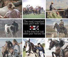 Looking for horse training courses in Canada? Turn to Equi-Health Canada! Safety Training, Horse Training, Training Courses, Emergency Preparedness, Canada, Horses, Health, Life, Salud