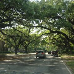 Spanish moss-draped live oak trees line many of the streets in downtown and midtown Mobile, including Springhill Avenue which is pictured here.