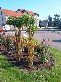 crengi de salcie Garden Planters, Garden Art, Home And Garden, Willow Weaving, Basket Weaving, Living Willow, Living Fence, Paper Weaving, Deco Floral