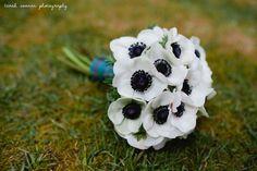 Anemones. Tarah Coonan Photography