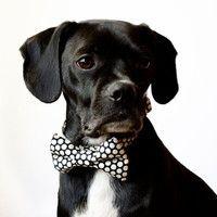 Black Honeycomb Dog Bow Tie Collar by SillyBuddy on Etsy