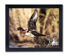 Wood Duck Flying Lake Animal Wildlife Cabin Lodge Picture Black Framed Art Print