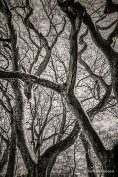 Inextricable http://bertrand-taoussi-photo.blogspot.fr/2014/11/inextricable.html L'inextricable intention glisse sur les branches cette volonté sans désir qui pousse vers le ciel souple et rigide comme un nid de serpents ce bouquet de bois vert offert aux oiseaux croît toujours plus haut pour envahir le vide. BT
