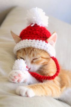 # Animals roupas Santa Cat Hat Crochet Pattern, Fun and Festive Christmas Crochet Pattern for Cats and Kittens, Quick and Beginner Friendly Cat Santa Hat, Cat Hat, Kittens Cutest, Cats And Kittens, Cute Cats, Cats In Hats, Chat Crochet, Crochet Hats, Photo Chat