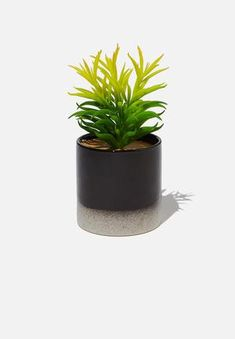 Shop Online | Superbalist Faux Plants, Raw Materials, Storage Baskets, Decorative Accessories, Earthy, Planter Pots, Make It Yourself, Mood, Shopping