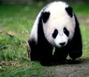 Googleの考える「良いコンテンツ」とは?パンダ・アップデート対策 海外WEB戦略戦術ブログ : http://www.7korobi8oki.com/mt/archives/2011/06/google-panda-update-guideline.html