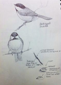 Chickadee study. Ballpoint pen.