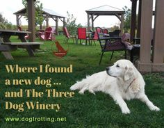 Pet-friendly Winery & How to Find a New Dog