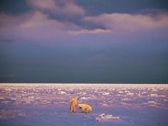 Polar Obsession Photos, Arctic Pictures, Animals and Landscapes -- National Geographic