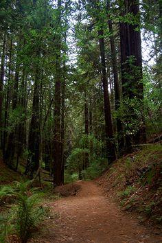 Redwood Regional Park. Love running these trails.