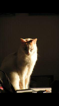 Arturo, il mio angelo bianco ❤️❤️❤️❤️❤️❤️❤️❤️❤️