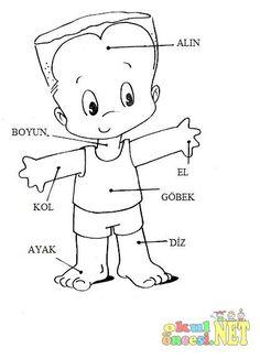 8 En Iyi Vücudumuz Görüntüsü Kindergarten Preschool Ve Day Care