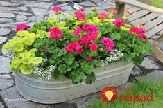 Beautiful Flowers in Junky Containers Flowers in small trough. MORE Beautiful Flowers in Junky Containers via Flowers in small trough. MORE Beautiful Flowers in Junky Containers via Container Flowers, Flower Planters, Container Plants, Garden Planters, Container Gardening, Succulent Containers, Fall Planters, Outdoor Flower Pots, Herbs Garden
