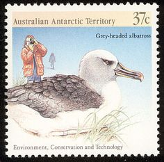 Grey-headed Albatross stamp
