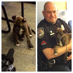 """""""Can I Keep Her?"""" Cop Asks About Dog He Saved   WOOFipedia by The American Kennel Club"""