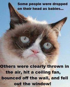 Funny grumpy cat quotes, grumpy cat funny, funny grumpy cat, grouchy cat, grouchy quotes …For more hilarious humor and funny pics visit www. Grumpy Cat Quotes, Funny Grumpy Cat Memes, Cat Jokes, Funny Animal Jokes, Cute Funny Animals, Funny Cats, Funny Jokes, Animal Memes, Animal Humor