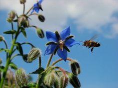 taustakuvia ilmaiseksi - Mehiläisten: http://wallpapic-fi.com/elaimet/mehilaisten/wallpaper-10073