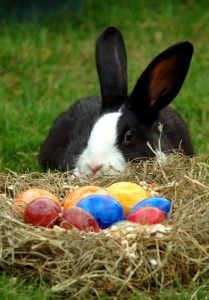 *Just checkin' the eggs~~