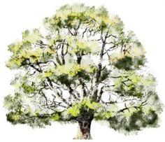Watercolor-Rendering-trees-004BB.jpg (1024×885)