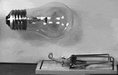 Você já viu uma lâmpada caindo em uma ratoeira?