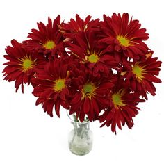 FiftyFlowers.com - Red Rover Mum Flower Mum Flower, September Flowers, Unique Flowers, Flower Arrangements, Harvest, Wedding Flowers, Plants, Red, November