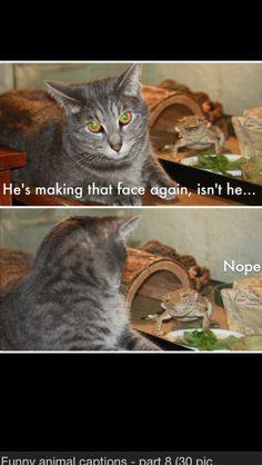 Holení kočička tumblr
