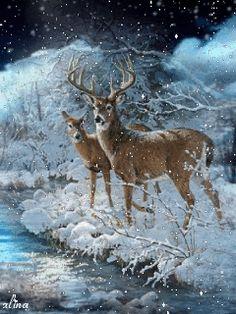 Deer in the snow animation Deer Photos, Deer Pictures, Winter Pictures, Christmas Pictures, Christmas Scenes, Christmas Animals, Christmas Art, Wildlife Paintings, Wildlife Art