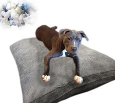 40''x35'' Gray Microsuede Large Size Mixed Shredded Memory Foam Premium Overfilled Pet Dog Orthopedic Pillow Bed with Waterproof -Resistant Inner Cover   FREE Bonus 2nd External Cover -- Unbelievable  item right here! (This is an amazon affiliate link. I may earn commission from it)