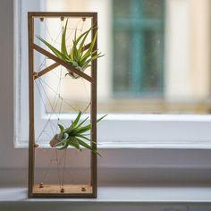 Air plants by Hui Buy Terrariums, Garden Terrarium, Ikebana, Indoor Garden, Indoor Plants, Cactus, Smell Of Rain, Air Plant Display, Office Plants