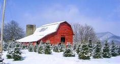 Smoky Mountain Christmas Tree Farm   Visit NC Smokies #barnpros #barns #barn #prefabbarns #barnhomes #barnkits #barnswithapartments #barnbuilding #barnhouses #barnkit Smoky Mountain Christmas, Prefab Barns, Visit Nc, Barn Kits, Christmas Tree Farm, Farms, Cabin, House Styles, Building