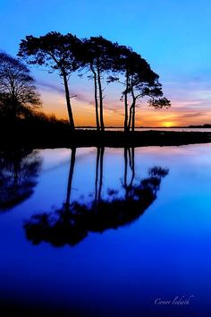 Bountiful Blue Sky of Beauty with Tree Trio  Reflection.