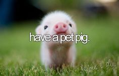 Bucket List: Have a pet pig. CHECK and bad idea lol!