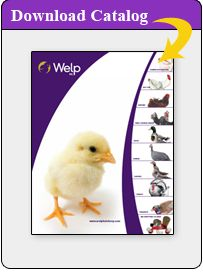Welp Hatchery - Poultry Chicks - Chickens, Turkeys, Geese, Ducks, Pheasants - Rare and Unusual Breeds - Bantams