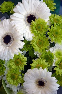 Green and white gerber flowers by Perl Photography, via Flickr