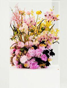 mark colle flowers for jil sander