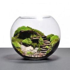 Inspiration n°1 : l'aquarium. Un mélange entre un jardin et un terrarium : le résultat fait son petit effet !