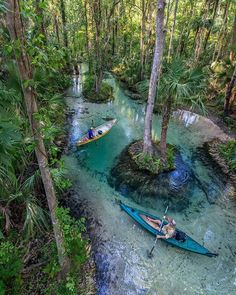 6 Florida Kayaking Tours With The Most Magical Nature Views