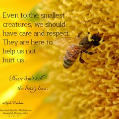 Even to the smallest creatures, we should have care and respect. They are here to help us not hurt us. Please don't kill the honey bees. Bee Quotes, Nature Quotes, Spiritual Quotes, Buzz Bee, I Love Bees, Bee Friendly, Save The Bees, Animal Quotes, Bee Keeping